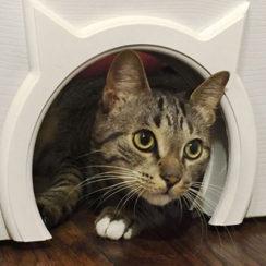 Двери с окошком для домашних животных